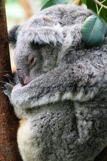 Schlafender Koala von buellom