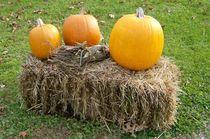 Pumpkins on a Haystack by skyler