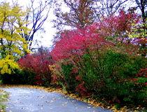 An Autumn Hike by skyler