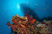 Divers Heaven von Norbert Probst