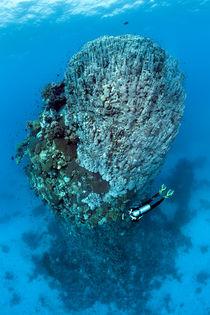 Coral Tower von Norbert Probst