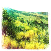 Utah Grass by Jenny Allport