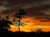 Tree Silhouette * Sunset by Zoila Stincer