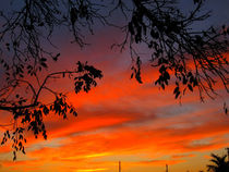Tree Silhouette = Sunset by Zoila Stincer