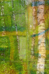 Birkenwald von © Ivonne Wentzler