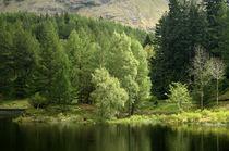 Grüne Insel, Schottland von mellimage