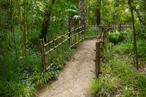 Path With Bamboo Fence by alina8