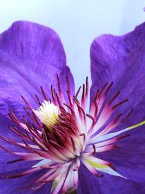 temptation in purple by Jacqueline Schreiber