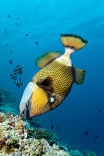 Divers Nightmare by Norbert Probst