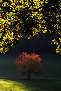 Herbstlandschaft von Wolfgang Dufner