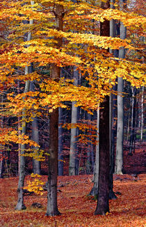 Farben des Herbstes by Wolfgang Dufner