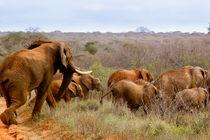 The Buena Kenya Social Club by Carinne Gamas
