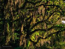 Old Jungle von Bruno Cissoto