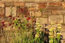 Mauerbluemchen von Ralph Patzel
