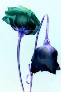 Lisianthus by Kerstin Runge