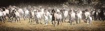 Wilde Pferde  by Barbara  Keichel