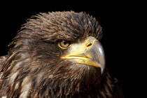 Angry by Ralph Patzel