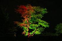 Der RotGrüne Baum von daniid
