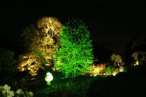 Botanischer Garten illuminiert 9 von daniid