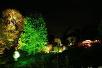 Botanischer Garten illuminiert 8 von daniid
