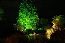 Botanischer Garten illuminiert 4 von daniid