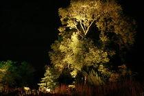Botanischer Garten illuminiert 3 von daniid