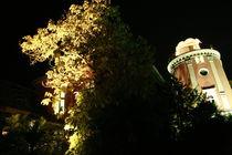 Botanischer Garten illuminiert 2 von daniid