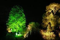 Botanischer Garten illuminiert 1 von daniid