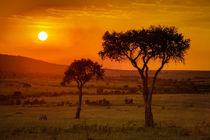 Sundowner in the Massai Mara by martin buschmann