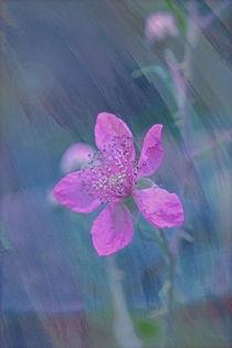 Img-rosablumchen
