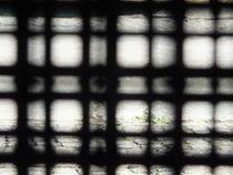 Hinter Gittern  von Lula Ahrens