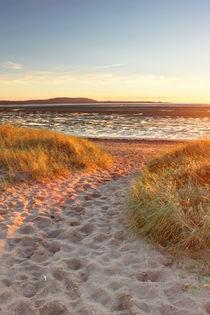Beach portrait by Dan Davidson