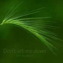 Don't let me down von shinywish