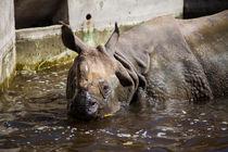 Rhino Spa by safaribears