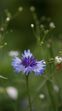 Der Tanz der Flockenblume by Sylvia Raetsch