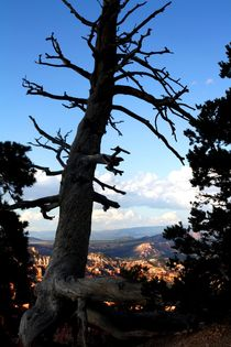 Baum am Bryce Canyon by Julia  Berger