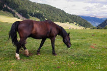 Horse in the Alps by Raffaella Lunelli