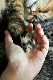 Hand in hand... by Raffaella Lunelli