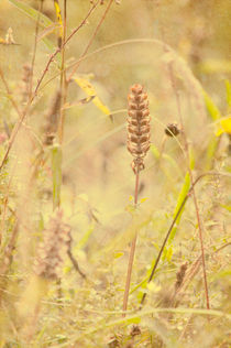 Wild Grasses von Dawn Cox