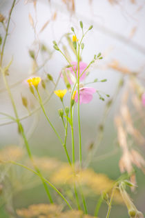 Wildflowers in the Meadow von Dawn Cox