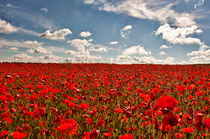 Field of Rememberance by Dawn Cox