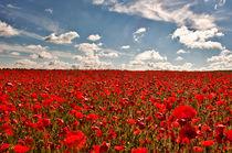 Field of Rememberance von Dawn Cox