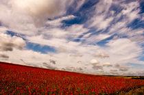 Poppy Field von Dawn Cox