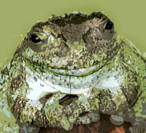 Mister Toad by Kathleen Stephens