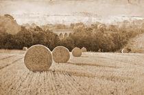 Wheat Fields by Dawn Cox