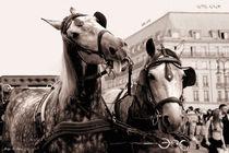 Performing-horses-1-kopie