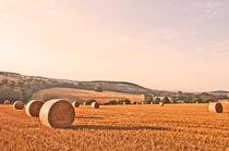 Rural Kent by Dawn Cox