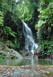 Rainforest Waterfall by Markus Strecker