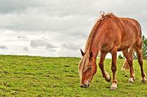 Chesnut Horse von Dawn Cox