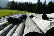 Holzstämme auf der Wiese von Anke Wetter